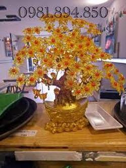 cây phong thủy loại nhỏ